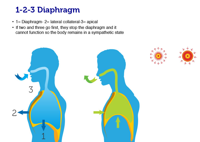How To Breathe Using Your Diaphragm Dr Tom Nelson. GM. Diagram Of A Diaphragm At Scoala.co
